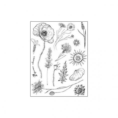 Gumi nyomda – Herbarium