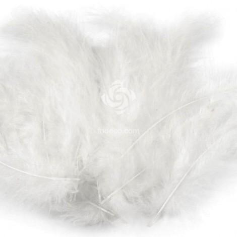 Madártoll - Fehér