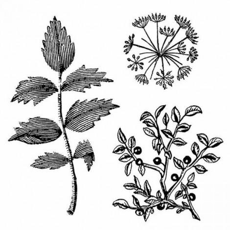 Gumi nyomda – Botanika
